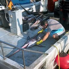 Il pescato (magioca65) Tags: 6x6 italia kodak voigtlander sanremo skopar brillant kodakportra160 epsonv600