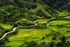 DSC_3979 (Le Hong Ha) Tags: road travel mountain green field nikon rice vietnam yellew