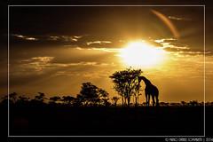 "Gooooood morning Tanzania! <a style=""margin-left:10px; font-size:0.8em;"" href=""http://www.flickr.com/photos/66444177@N04/15061878306/"" target=""_blank"">@flickr</a>"
