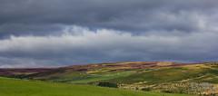 Purple Hills (Pixi.St) Tags: nationalpark heather hills northumberland hgel heidekraut