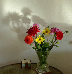 A piece of sunshine (cure di marmo) Tags: sunny blumen colourful shadowplay bunt dahlias schattenspiel