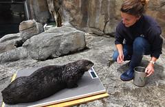Anglų lietuvių žodynas. Žodis aquarists reiškia <li>akvariatoriai</li> lietuviškai.