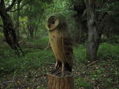 watching over the wood (Johnson Cameraface) Tags: 2016 october autumn olympus omde1 em1 micro43 mzuiko 1240mm f28 johnsoncameraface pottericcarr pottericcarrnaturereserve doncaster southyorkshire owl statue woodland yorkshirewildlifetrust