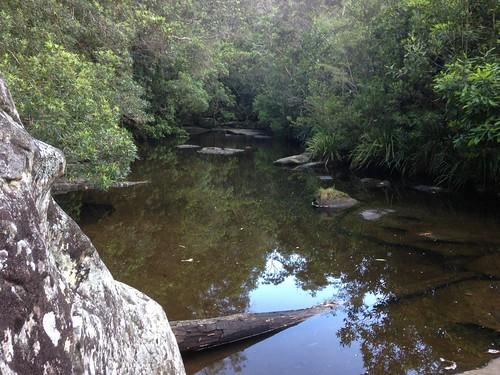 Mooney Mooney Creek, just above the tidal limit
