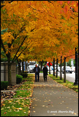 Walk With Me In The Autumn 我和秋天有個約會 - Oval N18186e (Harris Hui (in search of light)) Tags: harrishui nikond300 nikonuser nikon d300 vancouver richmond bc canada vancouverdslrshooter sigma70200mmf28 autumn fall fallcolor autumncolor city oval olympicoval walkinautumn walkinfall walkwithme trees leaves fallleaves street candid colour sidewalk