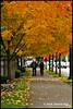 Walk With Me In The Autumn 我和秋天有個約會 - Oval N18186e (Harris Hui (in search of light)) Tags: harrishui nikond300 nikonuser nikon d300 vancouver richmond bc canada vancouverdslrshooter sigma70200mmf28 autumn fall fallcolor autumncolor city oval olympicoval walkinautumn walkinfall walkwithme trees leaves fallleaves street candid colour sidewalk