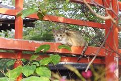 Today's Cat@2016-10-05 (masatsu) Tags: cat thebiggestgroupwithonlycats catspotting pentax mx1