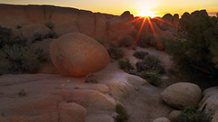 One minute, no more... (Robyn Hooz) Tags: joshua tree parco park rocce rocks deserto california alba sunrise valley valle bushes arbusti first luce prima