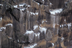 Westmanna (Mikkelmusiker) Tags: birds cliff fuglefjeld lomvie mallemuk iceland island landscape sea westmanna canon eos 60d ef400mm f56l usm