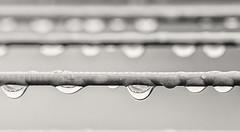 Wet Linen Line (Geoffrey Tibbenham) Tags: water droplets rain reflection line plastic wet weather blackandwhite monochrome fuji 90mm f2
