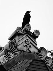 Carrion Crow (CJPhotography UK) Tags: animal wildlife nature natur natural bird crow carrioncrow bw black white roof building architecture urban urbanwildlife urbannature sky brick canon telefoto zoom detail tree perch