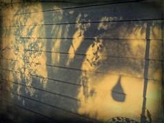 Morning Shadows (clarkcg photography) Tags: shadows morninglight dawn tree junipertree windchimes chairback umbrella sun