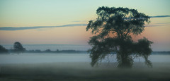 Ghostly Dawn (Knarr Gallery) Tags: dawn gloaming silhouette mist fog ghostly morning tree nikon d300 nikon18200mmvriiafs field cloud peaceful farm rural sunrise calm