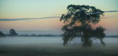 Ghostly Dawn (Knarr Gallery) Tags: dawn gloaming silhouette mist fog ghostly morning tree nikon d300 nikon18200mmvriiafs field cloud peaceful farm rural sunrise calm knarrgallery darylknarr knarrphotography