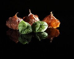 physalea (dr_scholz@ymail.com) Tags: physaleae groundcherry fruit solanoideae texasnative texasnativeplants studio blackbackground green brown canon5dmkii zeissmakroplanar100mmf2 makroplanar1002ze makroplanart2100 closeup