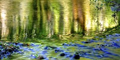 The whole forest (pauldunn52) Tags: water reflections river alun woodland rocks