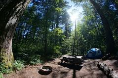tree talk (rovingmagpie) Tags: washington beaconrockstatepark beaconrock campground campsite camping tent 8mm touregon summer2016 trees