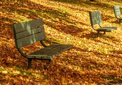 Waiting (Karen_Chappell) Tags: bench empty seat green orange park nfld stjohns downtown victoriapark leaves fall autumn october three 3