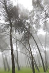 IMG_8323 (Juan Manuel Sanchez) Tags: otoo adrianospicture juanmanuelsanchez hojas arce rojo niebla fog campo montaa madrid espaa canon d60 naturaleza maana cielo silueta contraluz cesped hierba bosque norte