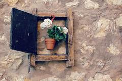 Lección de humildad (Helena de Riquer) Tags: albarracín teruel aragón sierradealbarracín españa maceta flowerpot test pot plantpot texturas mur pared paret wall flickr texture textura albarrassí topf25 helenaderiquer 2014 topf50 interestingness topf75 carlzeiss topf100 100faves flora finestra ventana windows janela ventanamágica brilliant restaurant sony spain spagne espanya sonydsch20