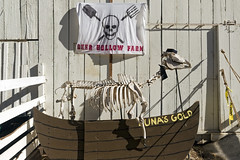 Pirate (LeftCoastKenny) Tags: ranchosanantonio halloween decoration deerhollowfarm boat flag skeleton barn