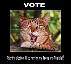 Trump's Pussycat (Chappy02) Tags: alection missing tacos falafels trump politics phenomenal cat publicdomain furry animals blink pussycat