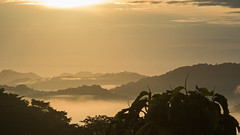 Early Morning In Panama (Hamilton Images) Tags: sunrise tropicalforest clouds mist canopytower panama centralamerica canon 7dmarkii 24105mm october 2016 img4985