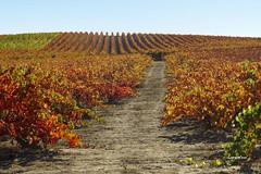 La Guardia (Rioja Alavesa) (eitb.eus) Tags: eitbcom 5963 g120245 tiemponaturaleza tiempon2016 otono alava laguardia lorentxoportularrumeazcue