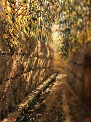 Alley in Shemiran (Painting) (RaminN) Tags: autumn painting iphone effect depthoffield