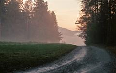 Würzelberg