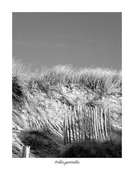Folles ganivelles (Chti-breton) Tags: dune oyat érosin ganivelle
