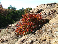 """Fire"" in the Mountains (jHc__johart) Tags: oklahoma wichitamtnwildliferefuge brush bush foliage leaves rockformations"