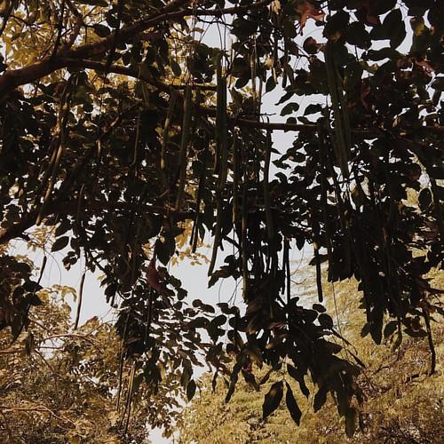 #beautiful #sundays #gardenoffivesenses #delhi #2016 #sunday #trees