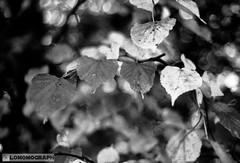 MonoColours (Lomomograph) Tags: 35mm diy analogue blackwhite blackandwhite camera devon film filmisalive filmisawesome filmisnotdead homeprocessing ishootfilm monochrome photography plymouth processing southwest unitedkingdom fpp minoltamd50mm17 d76 lomomograph alexkanchev alexanderkanchev xd7 minolta