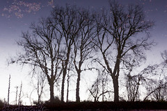squiggle trees (Christian Collins) Tags: reflection refleccion trees river tittabawassee midland mi railtrail overlook water río canon t2i efs24mm twilight evening tarde atardecer
