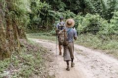 Hsipaw, Myanmar (DitchTheMap) Tags: hsipaw nature seasia asia burma fields flickr harvest harvesting hat hiking man myanmar people pindaya rice shan shanstate street traveling woman myanmarburma mm