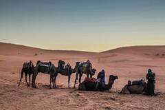 IMG_6081 (Israel Filipe) Tags: marrocos
