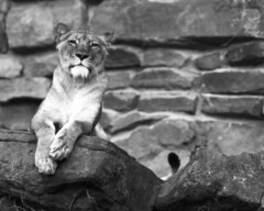Untitled (2) (Alan Butler) Tags: graflex superd wollensak fp4 ftworth zoo