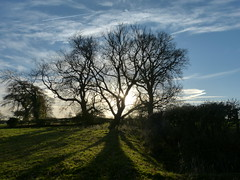 P1450768 (Joy Shakespeare) Tags: coundonwedge brownshillgreen coventry uk landscapes