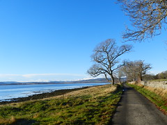 November Chill, Road to Redcastle, Black Isle, Nov 2016 (allanmaciver) Tags: redcastle novemeber chill trees shadows blue snow hills mountains low temperature frost wall dyke fields countryside allanmaciver