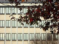 geometrie col ciuffo (fotomie2009) Tags: savona palazzo provincia liguria riviera ponente ligure windows finestre facciata faade