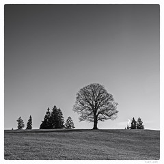 337/366 black white day (wideness) Tags: schwarzweiss entwicklung december eggiwil bern schweiz ch 2016 3662016 366dayproject 366the2016edition square canon canoneos6d eos 24105mm ef24105mmf4lisiiusm tree sky linden silhouette