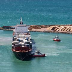 IMG_5486 (roseyposey2009) Tags: napier port bluff hill capekidnappersgannetsbluffhillnapierport