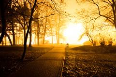 _DSC0412 (Marco Sky) Tags: nikon d5300 light silhouette tree shadow park poniatowskiego night overexposure yellow black lodz d