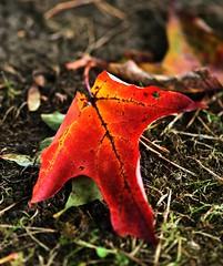 Oct 2016 LBG A156 (Explored) (Lostash) Tags: nature life plants flora seasons autumn leicesterbotanicalgardens