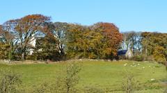 Ayrshire, Scotland. House of Craigie. Estate. Southern Aspect. (Phineas Redux) Tags: ayrshirescotland ayrshire scotland houseofcraigieayrshirescotland scottishlandscape