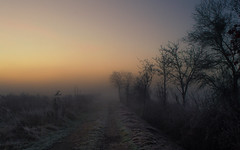 Colors of Dawn (Netsrak) Tags: baum bume dezember herbst landschaft morgen natur nebel sonne sonnenaufgang autumn december fall fog landscape mist morning nature sun sunrise tree trees