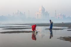 MYI_6073 (yaman ibrahim) Tags: india agra nikon d3 tajmahal yamuna morning water saree mis misty