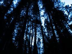 Don't mind (Romain Talgorn) Tags: sf usa ca wild nature photography alcatraz golden gate forest night day trip road travel landscape california united states sea sky sun