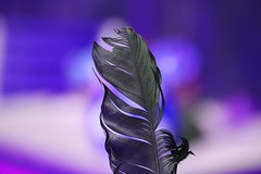 Blue Feather (Rolf-Schweizer) Tags: life blue art canon kunst creative photographyart artphotography rolfschweizer rolfschweizerphotography
